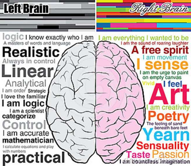 human-brain-left-right-what-you-24460874